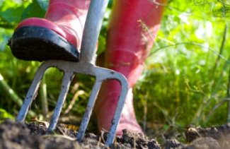 Forking the veg patch