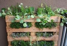pallet-garden-1